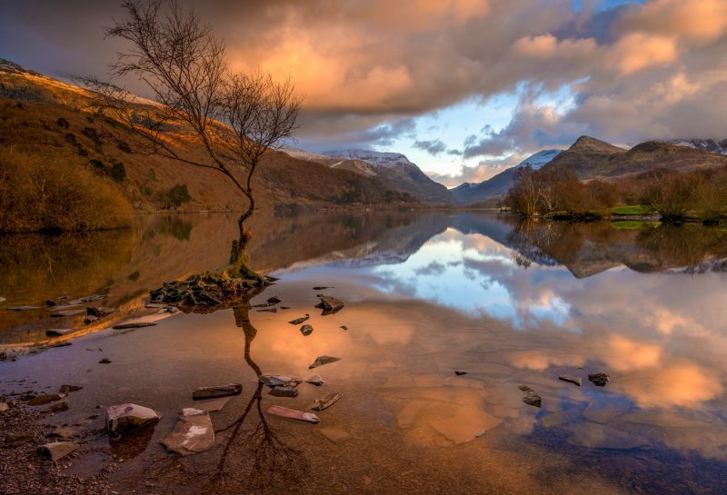 Lone Tree Snowdonia North Wales canvas prints wall art for sale