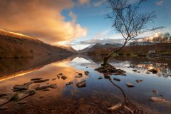 Wales landscape photography/Lone Tree Llyn Padarn Llanberis North Wales