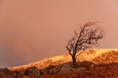 Wales Landscape Photography /Pen Yr Ole Wen tree